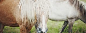 Iceland Wildlife  03