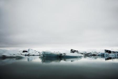 Iceland Wildlife 04