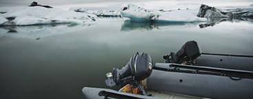 Iceland Wildlife  12