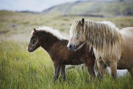 Iceland Wildlife 13