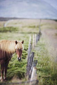 Iceland Wildlife  18