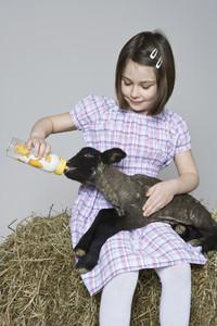 Livestock Lullaby 04