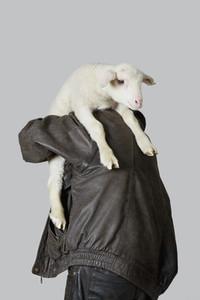Livestock Lullaby 10