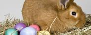 Livestock Lullaby  15