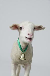 Livestock Lullaby  33