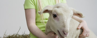 Livestock Lullaby  37