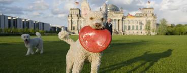 Dog Tricks  07