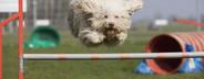Dog Tricks  13