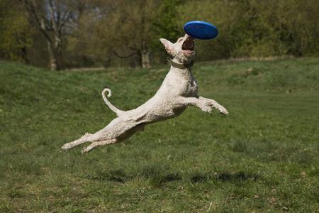 Dog Tricks 16