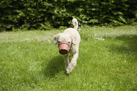 Dog Tricks  17
