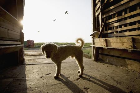 Dog Tricks 21