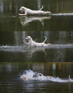 Dog Tricks 22