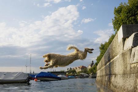 Dog Tricks 23