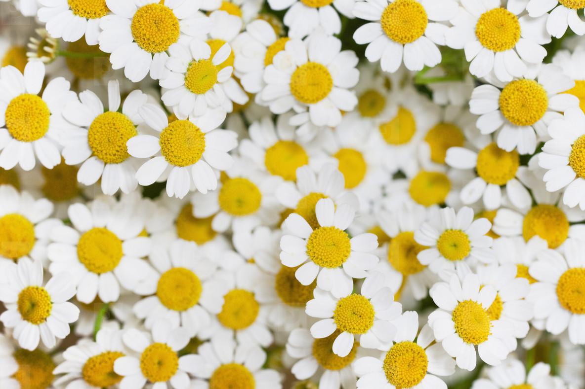 Springtime   09
