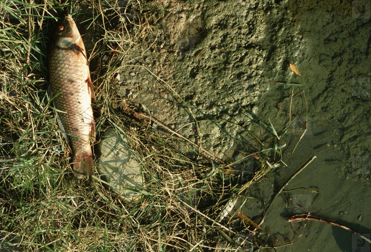 Animals in the Wild  09