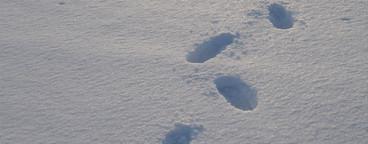 Snow Day  48