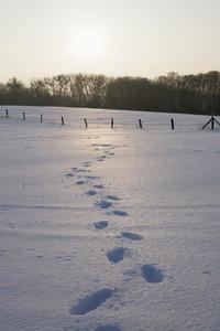 Snow Day 55