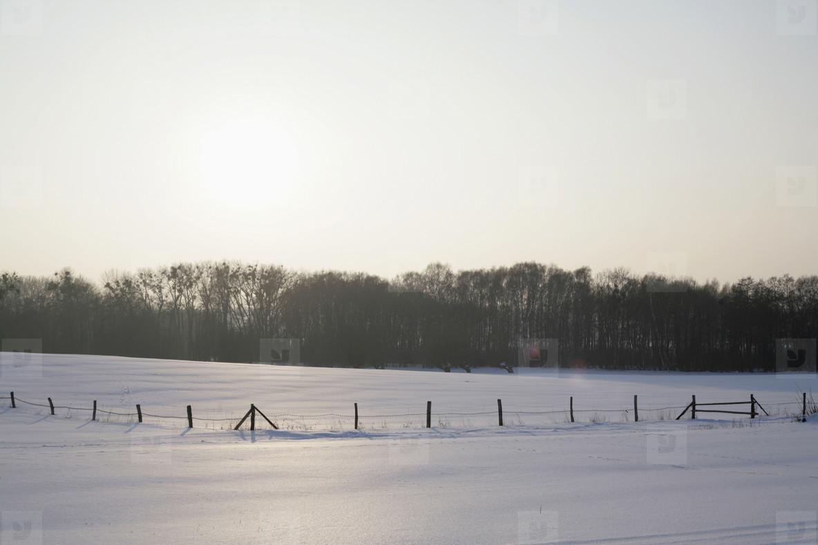 Snow Day  60