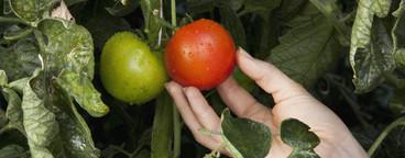 Farming Organically  05
