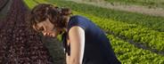 Farming Organically  11