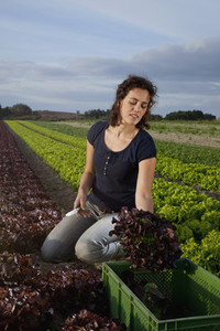 Farming Organically 19