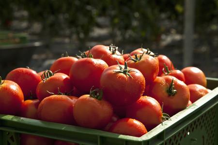 Farming Organically 20
