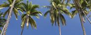 Island Hopping  08