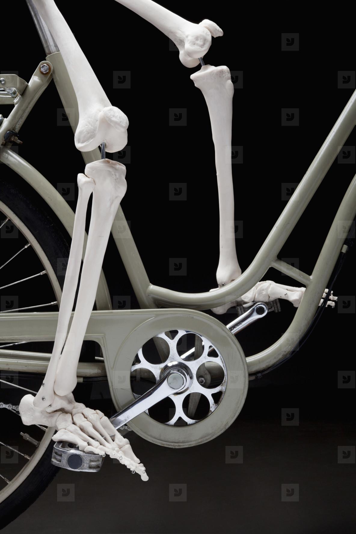 Skeleton Lives  24