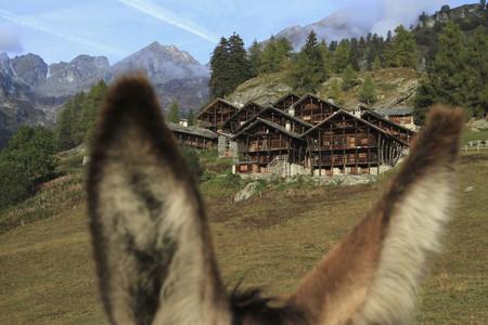 Mountain Holiday 01