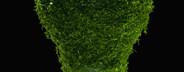 Green Living Miniatures  45