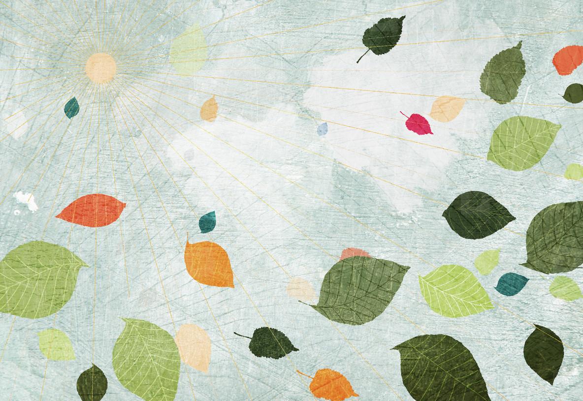 Illustrated Seasons  60
