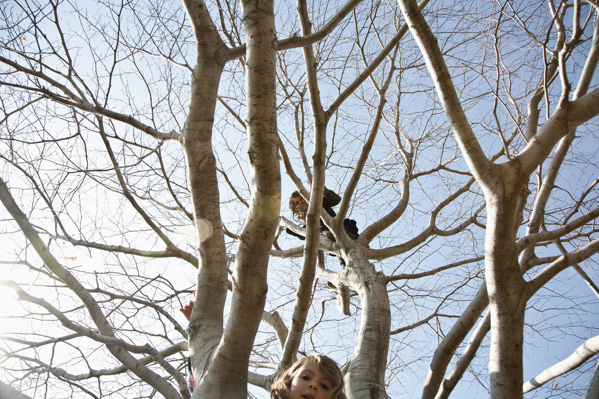 Climbing Trees  02