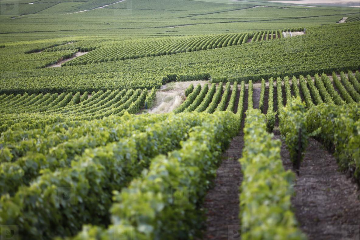 World of Wine  03