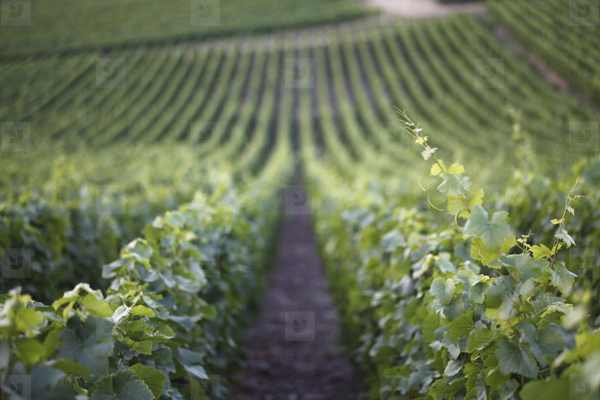 World of Wine  22