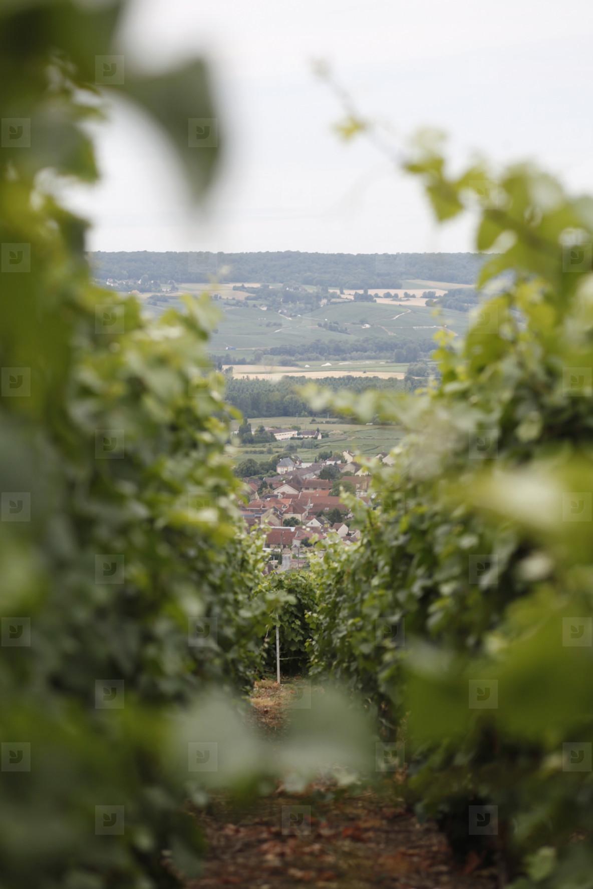 World of Wine  26