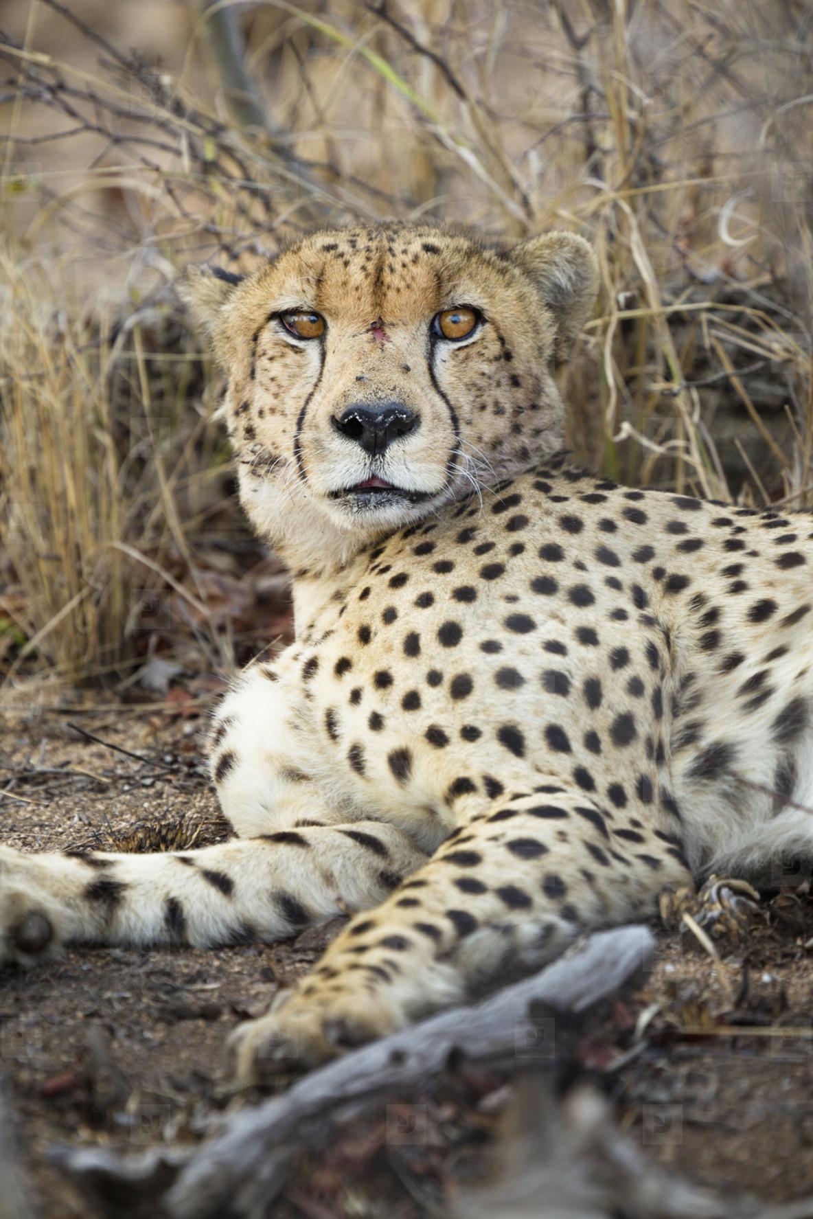 Safari Scenes  01
