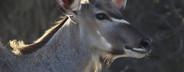 Safari Scenes  04