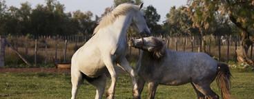 Safari Scenes  07