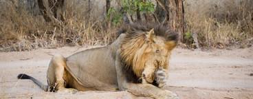 Safari Scenes  08