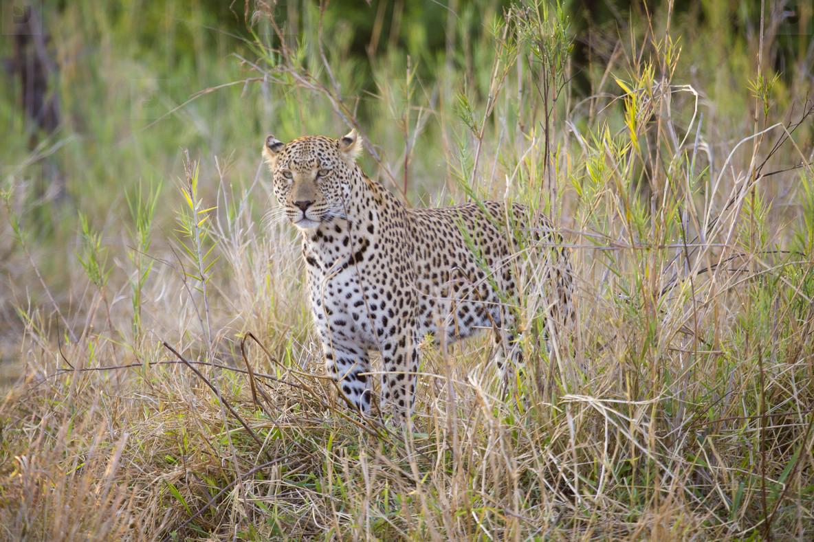 Safari Scenes  09