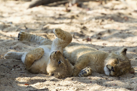 Safari Scenes 15