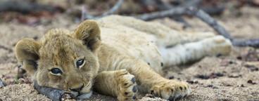 Safari Scenes  17