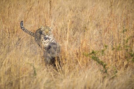Safari Scenes 19