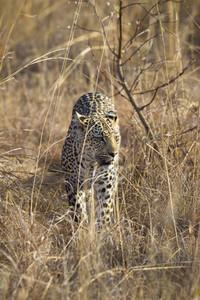 Safari Scenes 21
