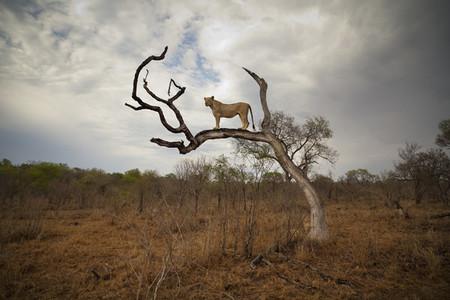 Safari Scenes 23