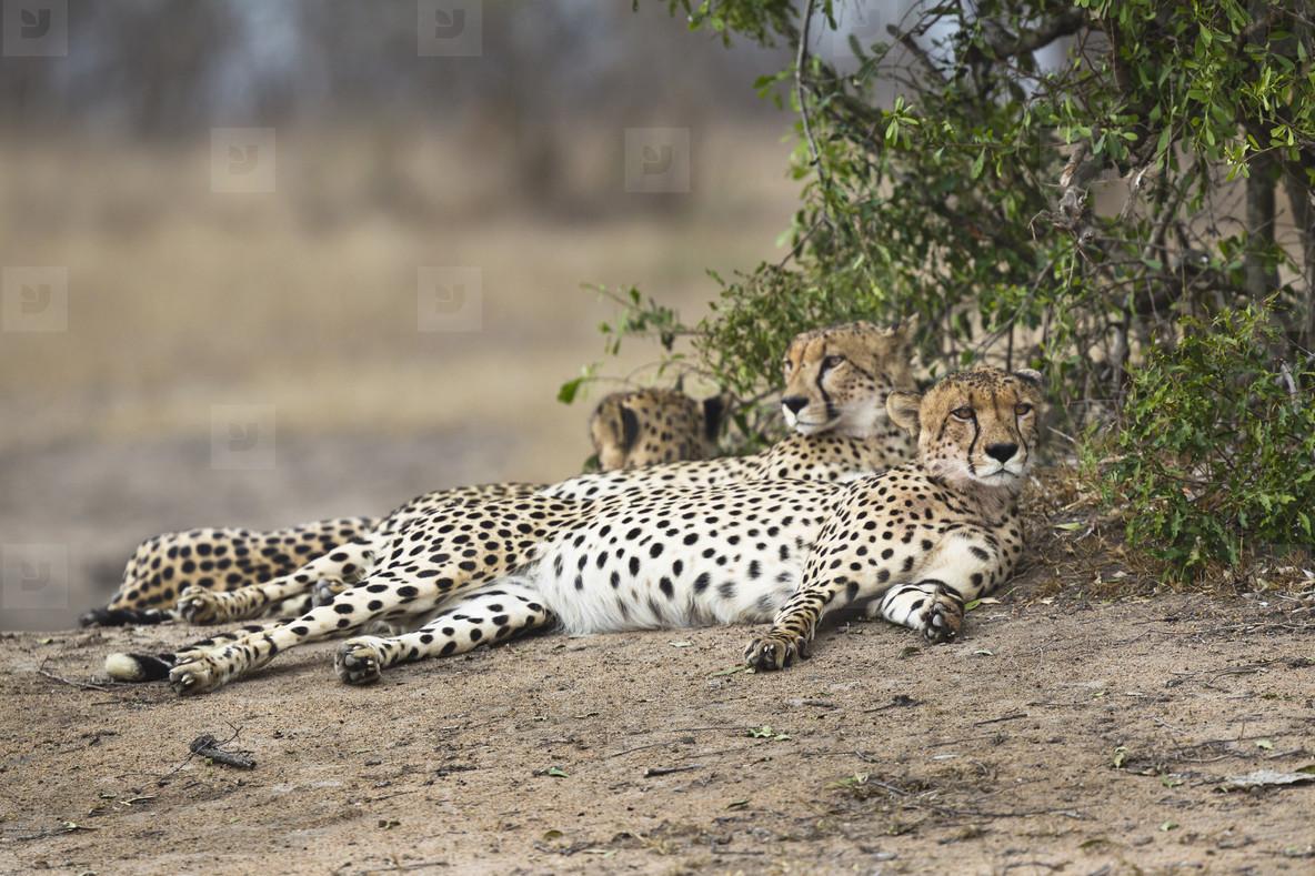 Safari Scenes  25