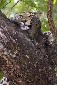 Safari Scenes 26