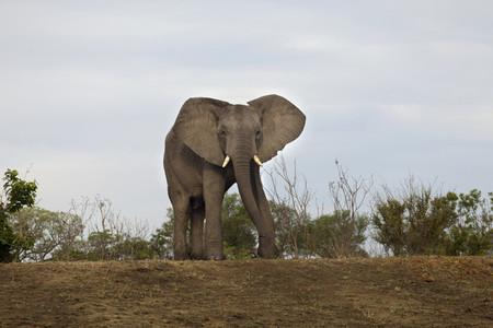 Safari Scenes 27