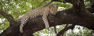 Safari Scenes  28