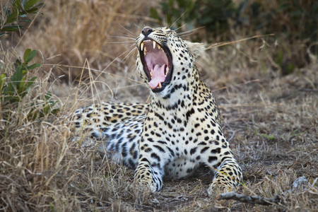 Safari Scenes  29